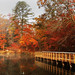 2nd Place - Scenics - Terry Guthrie - Fall Reflections