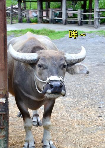 頭城農場_125.jpg