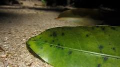 (Led Lerina) Tags: plant planta folhas nature leaves natureza morta deadnature abigfave