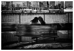 Lovers (Kam Sanghera) Tags: winter two bw white black london water thames river bench puddle spring couple south bank lovers waterloo cuddle romantic moment se1 aperturewoolwich apws