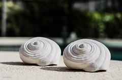 Shells (BGDL) Tags: shells shadows florida sunny poolside niftyfifty lakewoodranch 7daysofshooting nikond7000 bgdl lightroom5 nikkor50mm118g shadowyfriday week32blackandorwhite