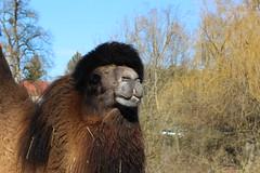 Tierpark Haag - Niedersterreich (Been Around) Tags: park winter animal animals zoo austria sterreich europa europe travellers eu haag
