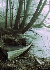 Rutten eka (kaffealskare) Tags: winter ice reed boat is vinter rowing rotten eka rowingboat vass rottenboat rutteneka