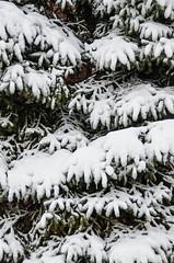 Snow-8095