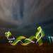 Light Graffiti : Hariyah Palestine & Syria