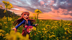 World in Gold (Ateens Chen) Tags: china sunset portrait people flower landscape nikon afterglow ateens horo goodsmilecompany d700 spiceandwolf 18scalefigure nikonafsnikkor35mmf14g mazakiyuusuke