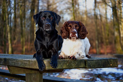My dogs. (Flemming Andersen) Tags: dog hund