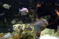 Aquarium de Paris  (27) (Mhln) Tags: paris aquarium requin poisson trocadero poissons meduse 2015 cineaqua