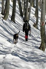 erdei út / forest path (debreczeniemoke) Tags: winter snow forest path út gutin hó tél erdő ösvény canonpowershotsx20is gutinhegység munţiigutâi munţiigutin gutinmountains