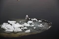 In attesa che arrivi l'estate (IO,Marina.) Tags: inverno freddo viaggio neva ghiaccio passeggiando sanpietroburgo
