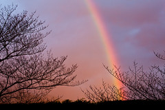 the keys to the sky (keith midson) Tags: trees sky sunrise rainbow foliage tasmania hobart