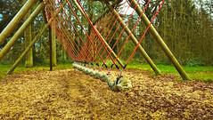 Swing (Mado AwaD) Tags: park wood red green nature colors leaves forest season ma belgium outdoor scenic scene swing sharp serene bushypark mado 2016
