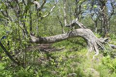 Cape Split (HalifaxTrails.ca) Tags: ocean tree bay spring minas novascotia hiking basin trail valley marker cape annapolis split fundy tides scots capesplit