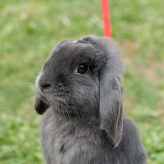 Foto profilo (divi333) Tags: rabbit bunny ferrara coniglio 2016 conigliando