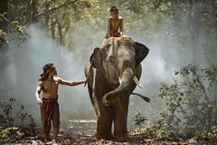 My brother and elephant (SaravutWhanset) Tags: boy summer elephant man animal asian asia smoke safari explore blackground bearfoot afarica chield amezing