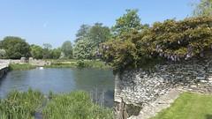 Fairford Mill Pond (Nigel Musgrove-1.5 million views-thank you!) Tags: mill duck swan cygnet cotswolds mallard wisteria fairford