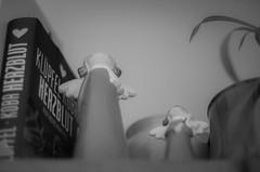IMGP2014.jpg (Zeilenende) Tags: engel froschperspektive dekoration