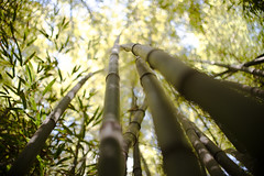Grow Away (B l u e A i r) Tags: madrid light espaa primavera luz nature beauty forest 35mm garden trenes spring spain nikon prince bamboo fisheye redhead bosque prncipe fullframe 8mm bamb jardn d800 aranjuez