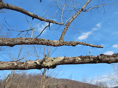 DSCN3659 (shelly_tichy) Tags: frosty february ohiopyle