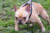 16-05-15_untitled_531 (Daniel.Lange) Tags: dog philadelphia dogs dogdayafternoon spado columbussquarepark
