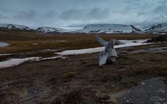 Whale Vertebrate (Craig Hemsath) Tags: snow nature norway lumix panasonic svalbard arctic micro g6 43 linblad 1235 expeditions mirrorless