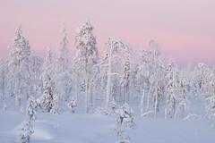 Kuusamo winter landscape 17 by Olli Lamminsalo (www.finnature.com) Tags: lumi talvi tammikuu auringonlasku huurre kylm talvimaisema tykky purppura panorointi tikankolo tammikuu2010 lusmingintie
