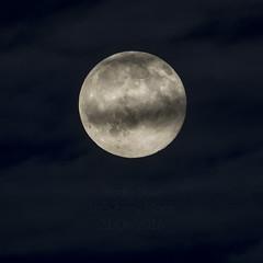Strawberry Moon (Studio Skwit) Tags: light moon cold studio star strawberry nikon luna nasa full fullmoon craters squid planet planets moonlight steven lunar satelite halfmoon planetoid maan nolife strawberrymoon d7100 nikond7100 skwit studioskwit stevensquid jannekedemaan
