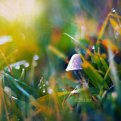 My Little Home (Joo Pedro de Almeida) Tags: world pink blue light summer plant abstract blur cold flower macro green home nature mushroom colors beautiful beauty field forest spring focus warm soft day peace shadows dof seasons purple little bokeh outdoor magic details memories dream sunny fairy fantasy micro lonely shroom piece stillness 50mmf18 canon600d