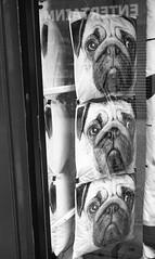 Three (Man with Red Eyes) Tags: 3 monochrome analog three blackwhite display rangefinder lancashire lancaster shopwindow m6 cushions leicam6 shopdisplay adox silverhalide v850 td201 silvermax anchelltroop 40mmf14voigtlandersc a3minsb3mins continuousagitation