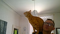 Moving on up (The Wellparker.) Tags: cat ginger nokia