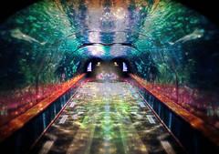 Double Trouble (JangoFeldman) Tags: photomanipulation photoshop effects shark surreal tunnel textures artshow layered fineartgallery artdigital crazygeniuses pixabay richeyesgallery netartii picmonkey thrylium