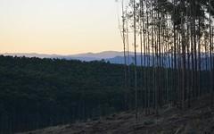 slender (dustaway) Tags: trees landscape shadows australia plantation nsw hillside northernrivers agroforestry richmondvalley afternoonlandscape doubtfulcreekvalley trentyslane