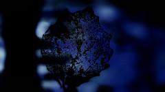 I remember... (ElsjeD) Tags: nature garden skeleton leaf bokeh natuur blad tuin samsungnx300