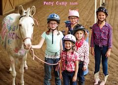 Show day-48 (Webbed Foot Photo) Tags: horses horse pennsylvania ponycamp webbedfootphotography pentaxk1 opengateranch darrenolsen dtolsen webbedfootphoto hunterhillsfarm