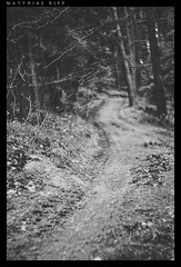 Into the woods (mripp) Tags: mono monochrom black white schwarz weiss wald forest nature art kunst bavaria bayern pposter desktop screensaver mystic dark dunkel baum bume