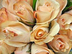 Elegant Rose Bouquet (bigbrowneyez) Tags: roses elegant romantic gorgeous flowers fiori belle bellissime fabulous striking stunning lovely fresh droplets wet nature natura amazing awesome delight delightful blossoms petals flickrbouquet pretty prettyroses gift regalo elegantrosebouquet