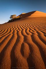 magicalnaturetour June 30, 2016 at 01:00AM (michellelabelle1) Tags: africa sunlight tree lines contrast landscape sand afternoon wind patterns dune scenic bluesky namibia sanddunes clearsky sidelight namibnaukluftpark magicalnaturetour