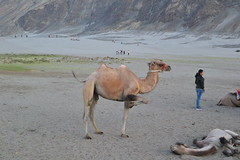 this way ahead (sootix) Tags: sand camelride bactriancamel
