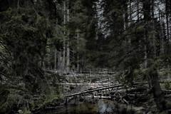 Moorwald (Joerg Marx) Tags: trees forest moor wald bume bavarian wasteland bayerischer
