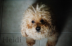 Teddy (LveMeBreathless) Tags: light dog pet love animal happy sweet handsome shades perro lindo animales mascota