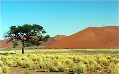 Lonely Tree, (tor-falke) Tags: africa tree nature landscape desert african ngc natur safari land afrika landschaft namibia arbre baum wüste deserto afrique désert namib namibie africalandscape torfalke flickrtorfalke