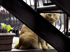 Gotcha! (MomoFotografi) Tags: red bw white plant black green stairs digital cat eyes chat noir shadows quebec plateau montreal olympus stray et 50200mm blanc zuiko f28 escalier roux e5 olympuse5