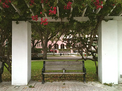Bench (Barefoot In Florida) Tags: bench stpetersburg florida bandstand straubpark bouganvilliea