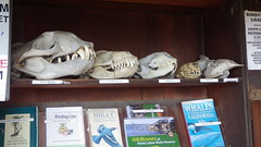 Skulls (rhyang) Tags: hiking centralcaliforniacoast pointlobosstatereserve