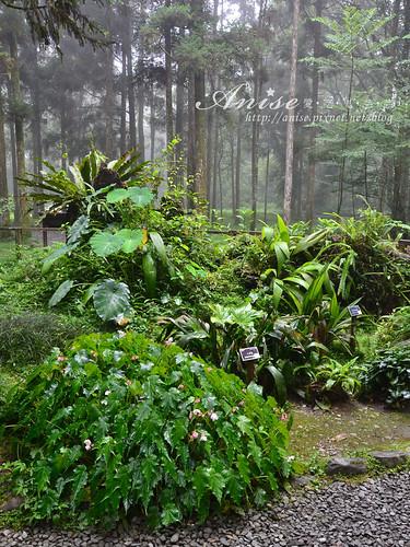 福山植物園_025.jpg