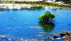 FROZEN POND   P2011855 (Felipe 1930) Tags: flickrdiamond mmmilikeit blu4u italy4u reflect4u photograficworld