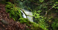 Geroldsau Waterfall - IX (Ralph Oechsle) Tags: panorama creek germany deutschland waterfall spring badenbaden schwarzwald blackforest smalldof geroldsauerwasserflle geroldsauerwasserfall geroldsauwaterfall geroldsauwaterfalls