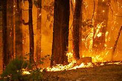 Ground Fire (gcquinn) Tags: california wild usa fire geoff flames ground yosemite quinn geoffrey rimfire onearthnrdc
