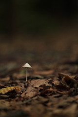 Once, in the deep dark forest... (Nogatron) Tags: greatbritain autumn brown white nature mushroom leaves fairytale rural forest canon woodland dark woods flora gloomy natural eerie shade toadstool oxfordshire atmospheric greatoutdoors wytham eos1100d