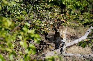 Botswana Okavango Delta Photo Safari 14